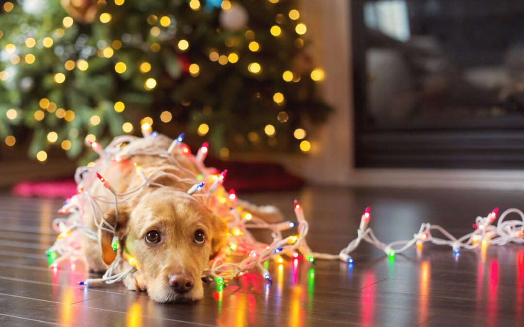 Making Sure Your Holiday Décor Isn't Dangerous to Your Pets