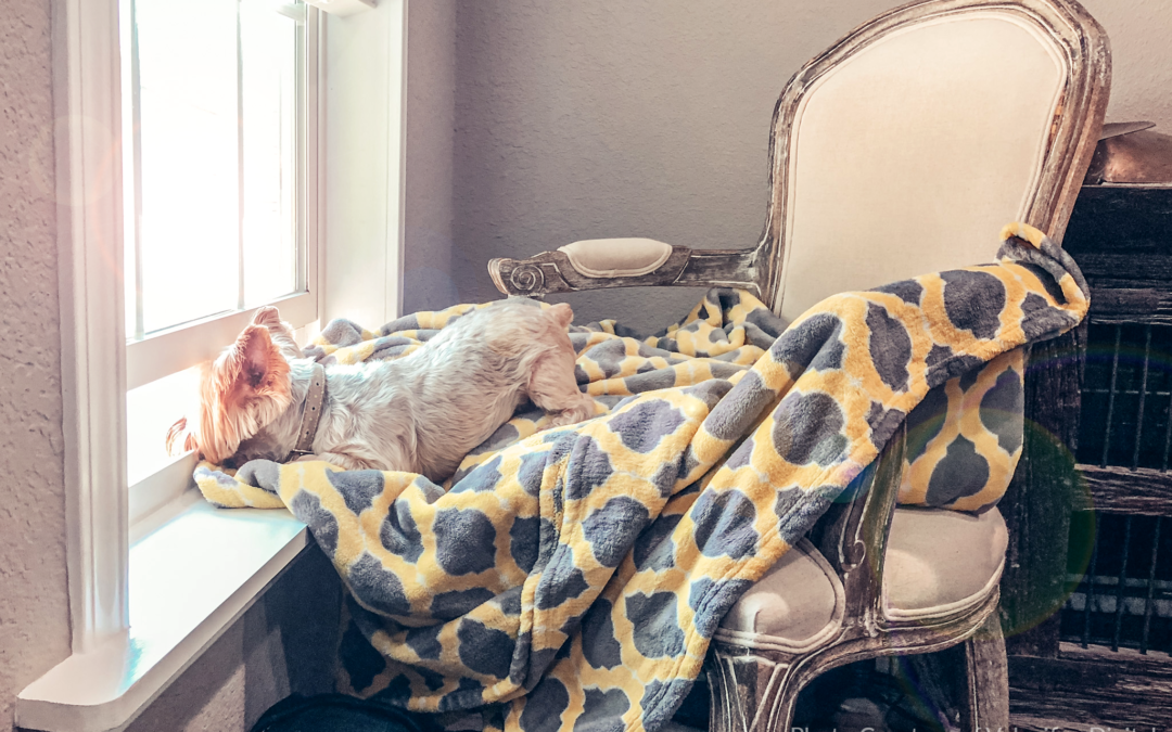 Pet-Friendly Renovations that Make All Family Members Feel at Home